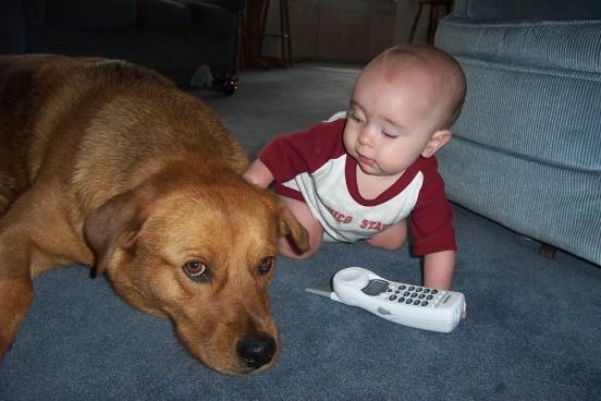 niemowle a pies